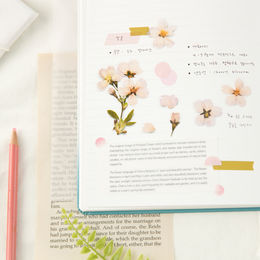 Appree | Pressed Flower Sticker Sheet: Cherry Blossom