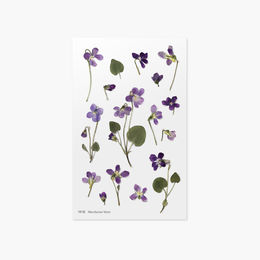 Appree | Pressed Flower Sticker Sheet: Manchurian Violet