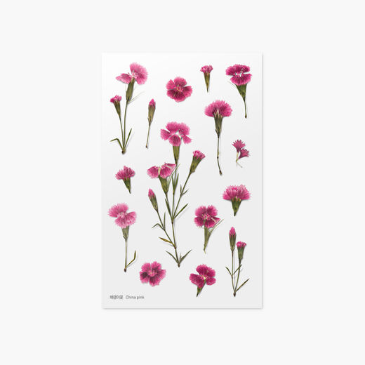 Appree | Pressed Flower Sticker Sheet: China Pink