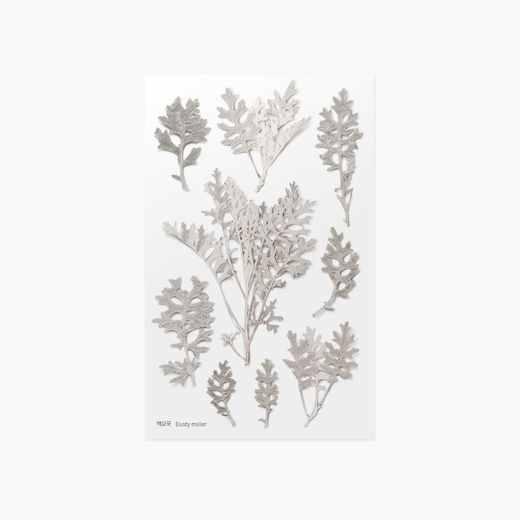 Appree | Pressed Flower Sticker Sheet: Dusty Miller