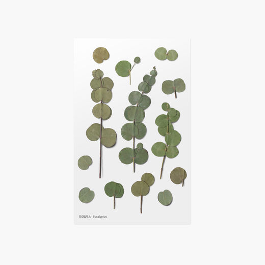 Appree | Pressed Flower Sticker Sheet: Eucalyptus