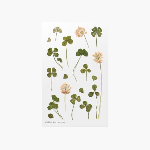 Appree | Pressed Flower Sticker Sheet: Four Leaf Clover