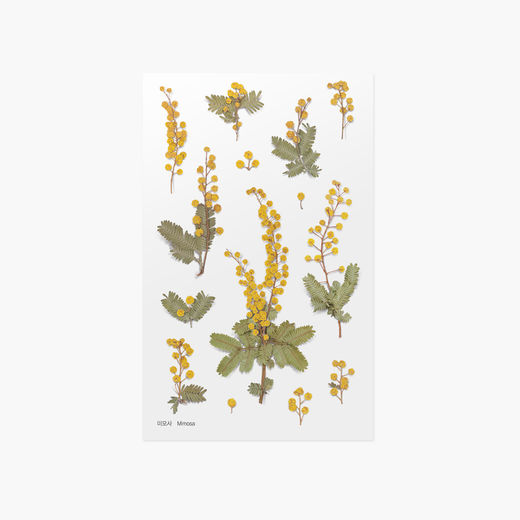 Appree | Pressed Flower Sticker Sheet: Mimosa