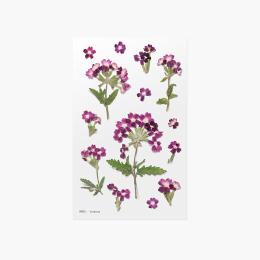 Appree | Pressed Flower Sticker Sheet: Verbena