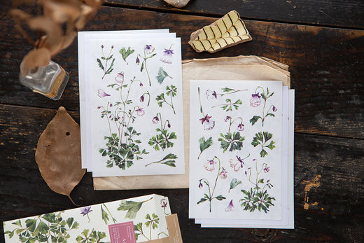 OURS Aquilegias Sticker Pack