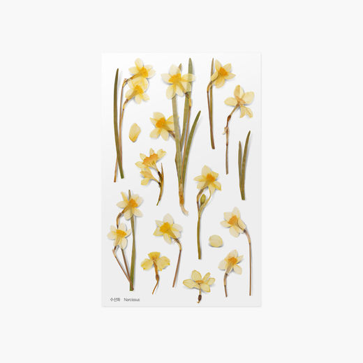 Appree | Pressed Flower Sticker Sheet: Narcissus