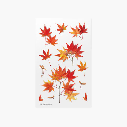 Appree | Pressed Flower Sticker Sheet: Palmate Maple